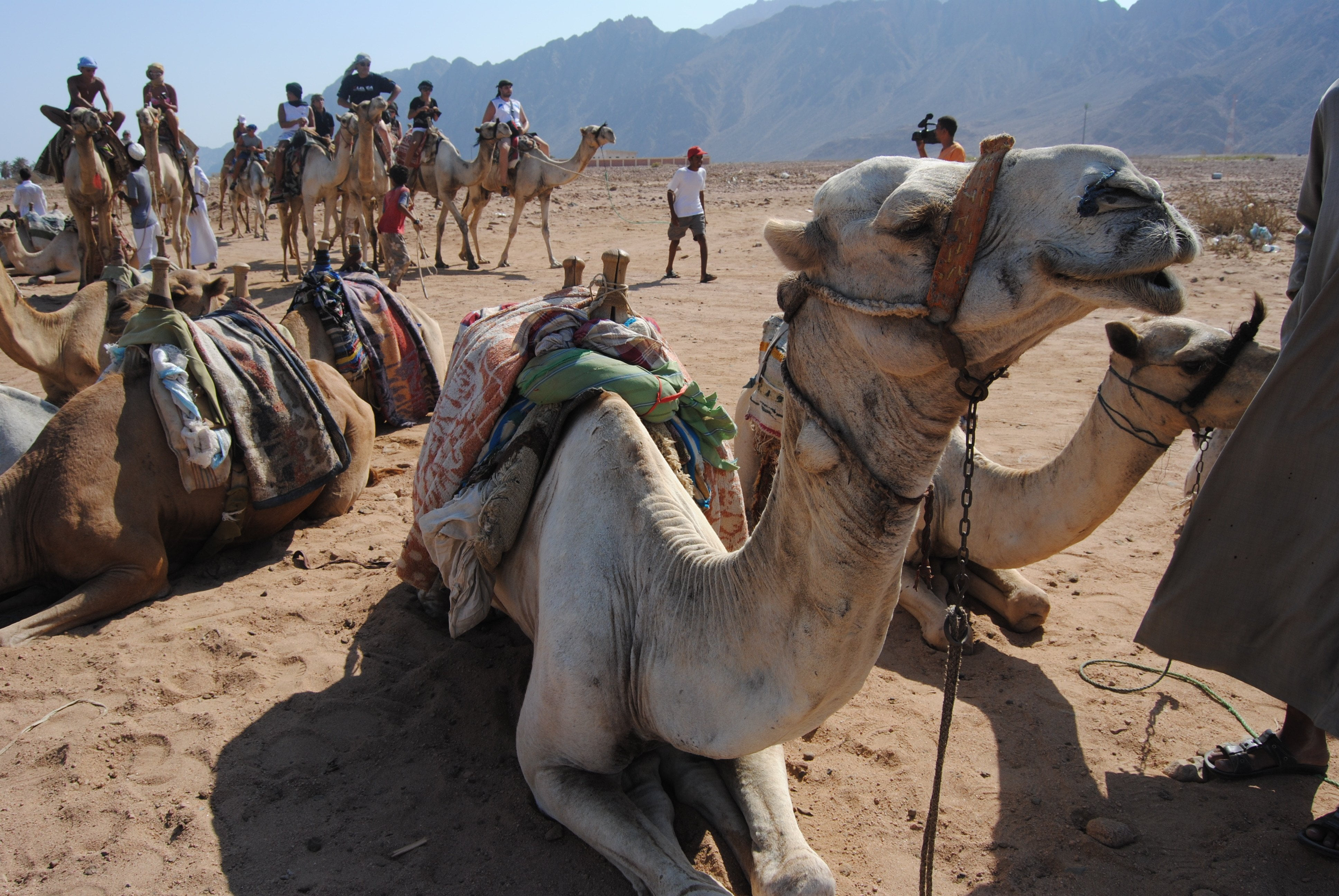 Egypt_camel ride