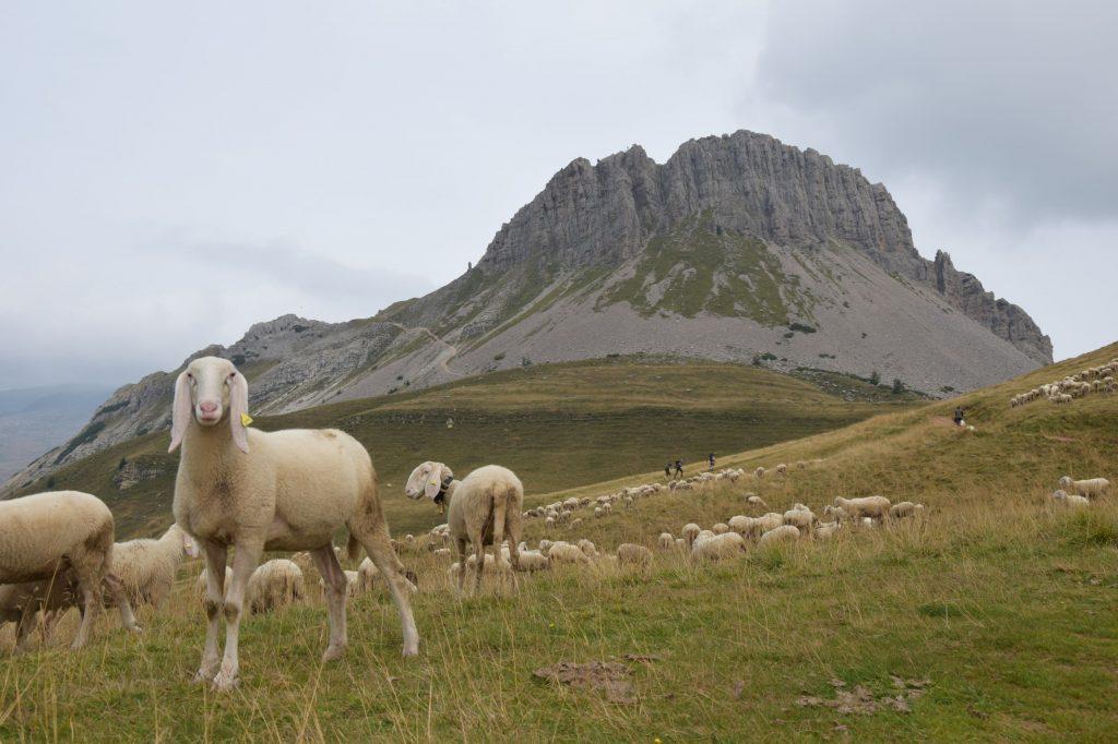 Trekking del Cristo Pensante Monte Castellazzo_come arrivare