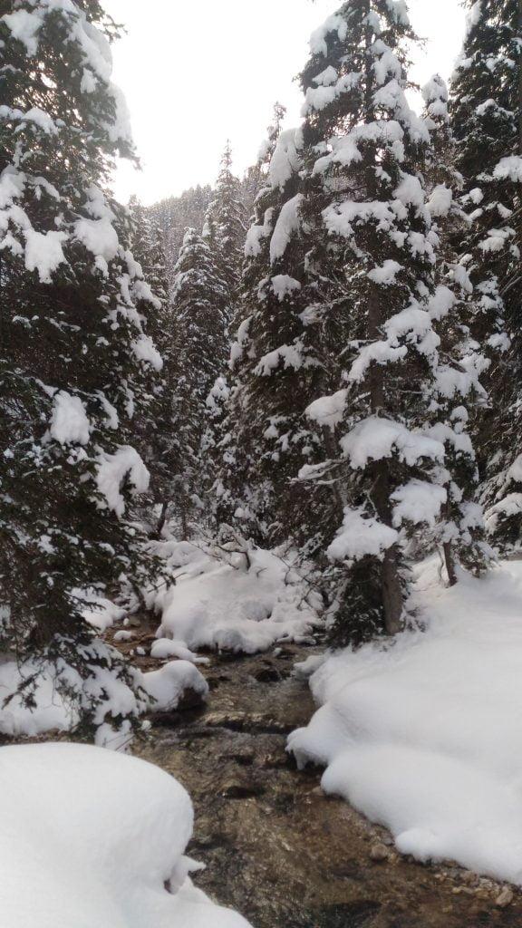 Ruscello_Val Venegia in inverno