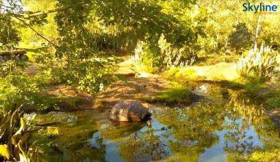 vedere il mondo da una webcam_Galapagos