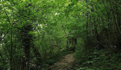Forest Bathing_immergersi nella natura, sentiero sterrato in mezzo al bosco