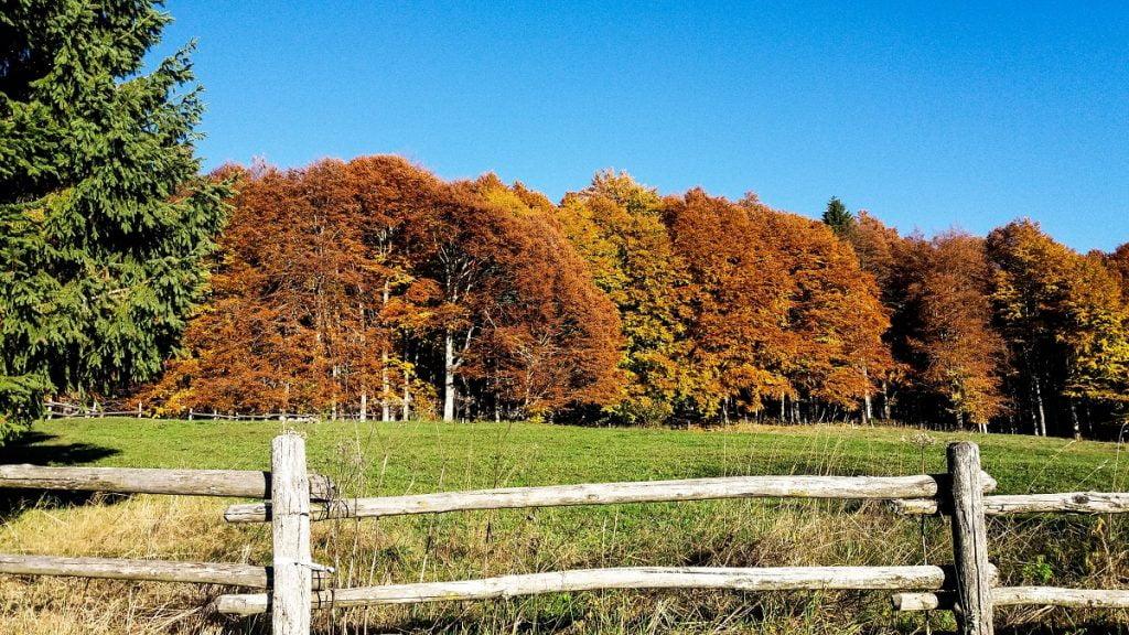 Alpago_il foliage autunno in Italia
