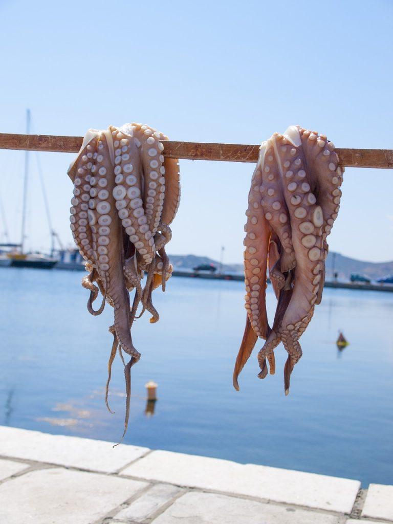 Polipo steso a Naxos