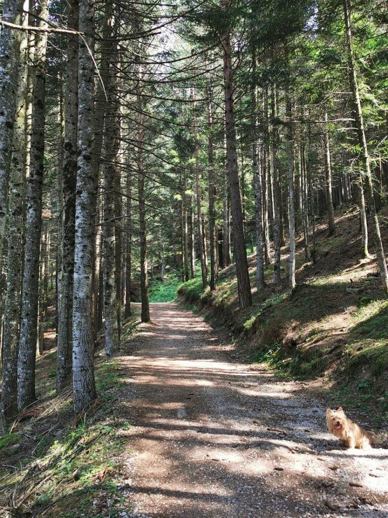 Giro del Solombo_escursioni bambini val di fiemme