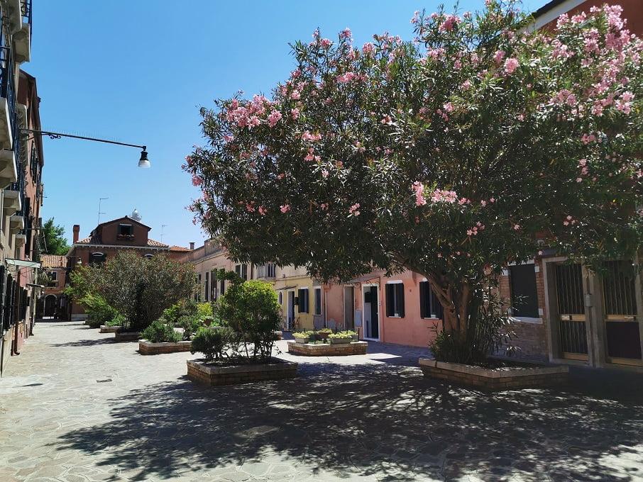 Piazza di Murano con albero in fiore