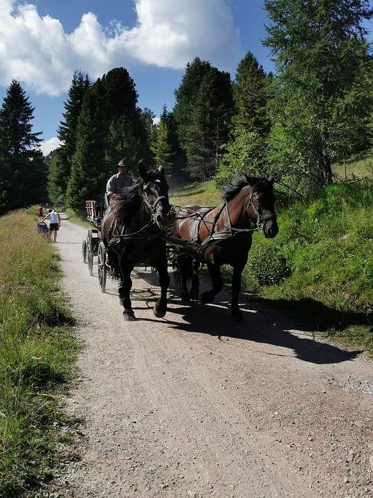 val di fiemme escursioni facili malga bocche in carrozza