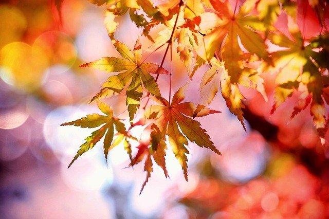 cos'è il foliage