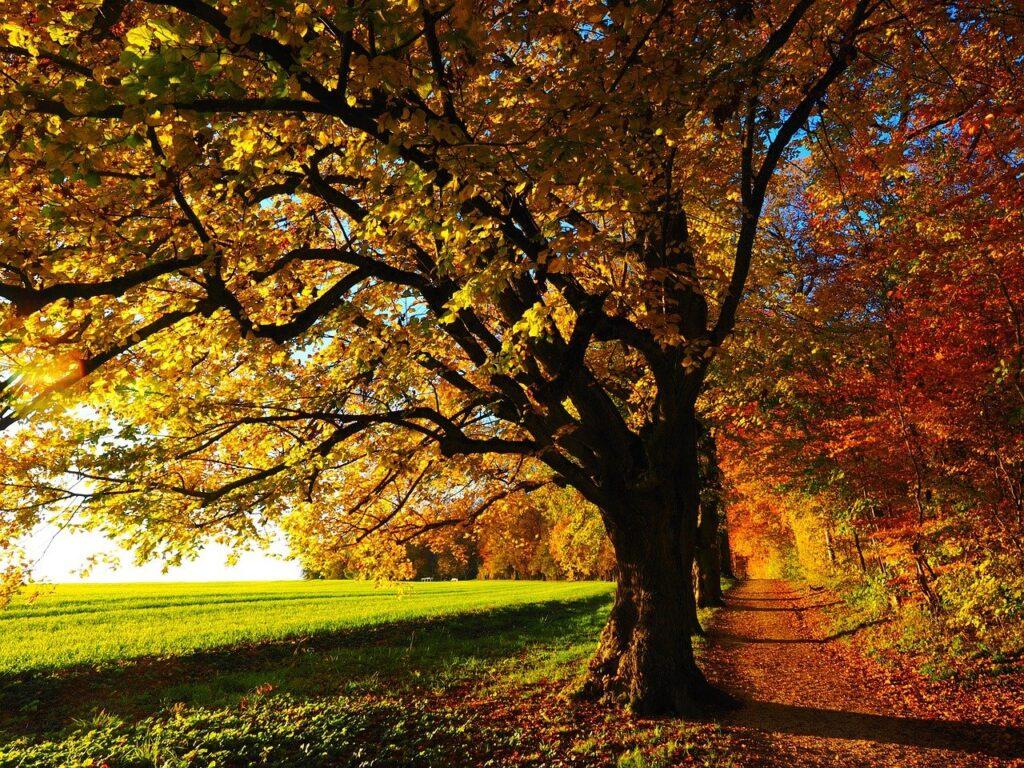 immagine autunnale con colori dell'autunno